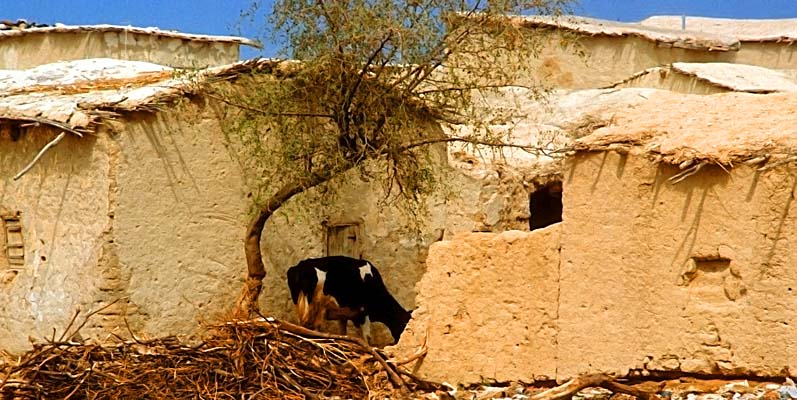 Images of the holy land by don o thorpe for Jericho house